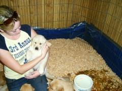 puppies10