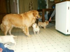 puppies13