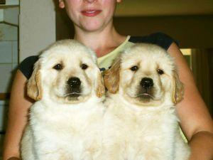 puppies9